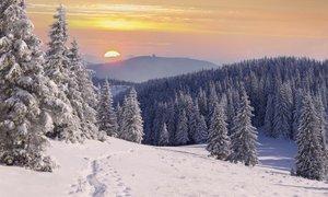 Nam La Niña prinaša mrzlo in belo zimo?