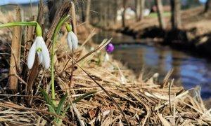 Zadnji dnevi februarja bodo povsem pomladni s temperaturami okoli 20 stopinj