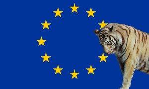 EU: brezzobi tiger, ki zdaj poskuša uporabiti kremplje