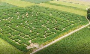 Koruzni labirint v obliki ljubljanskega zmaja v Krtini