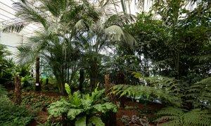 Eksotična džungla sredi Prekmurja: 'Najbolj čudaška orhideja je vanilija'