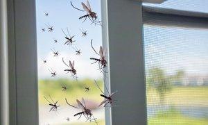 V Slavoniji komarjem napovedali vojno