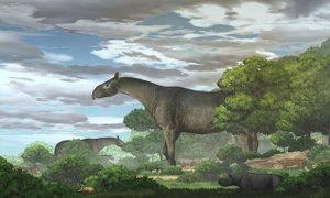 Novoodkrita vrsta starodavnega nosoroga je bila višja od žirafe