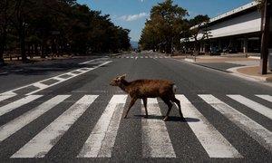Prazne ulice mest zavzemajo divje živali