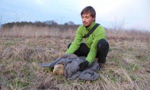 Zastrupitev dveh ogroženih belorepcev na Dravskem polju