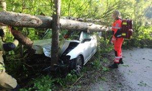 Voznika zaneslo s ceste, ustavilo ga je drevo