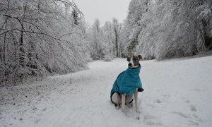 Kje v Sloveniji naj bi jutri že poplesavale snežinke?