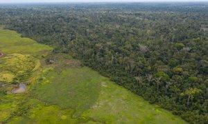 Znanstveniki svarijo: Tropski gozdovi izgubljajo zmožnost absorpcije CO2 iz ...