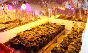 Na območju Goričkega odkrili laboratorij za gojenje konoplje