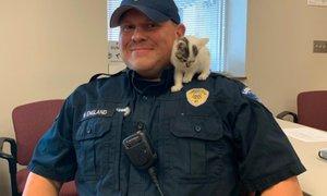 Na letališču našli zapuščeno mačko: posvojil jo je uslužbenec