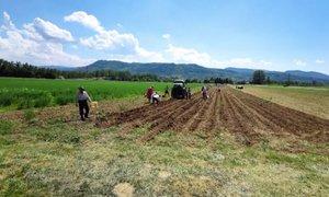 Krajani rešili osem ton krompirja