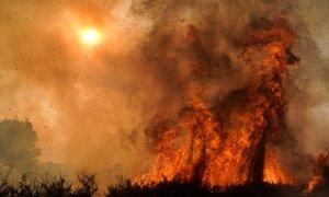 Požari v Kaliforniji ne pojenjajo: na jugu evakuirali 100.000 ljudi