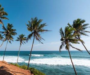 Šrilanka: prostrane plantaže čajevca, džungla in čudovite plaže