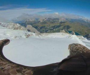 Orel Viktor s kamero na hrbtu poletel nad ledeniki