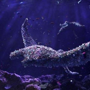 Plastika v morskih organizmih