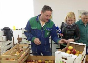 Slovenski družini ostalo še 30 ton ekološko pridelanih jabolk, ki čakajo kupca