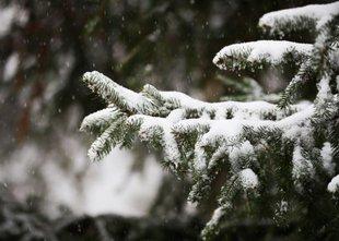 Ponoči nova pošiljka snega, nevarnost žleda in poledice
