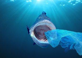 Radi jeste morsko hrano? Pa veste, koliko plastike vsebuje?