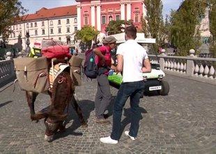 Osel, pes in Francozinja sredi Ljubljane