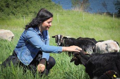 Med majem in oktobrom se bodo na Otoku na Donavi tako pasle ovce avstrijske avtohtone pasme 'Krainer Steinschaf'.