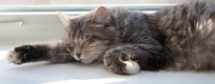 Če pogledate mačko v oči in mežika, vam s tem sporoča svojo naklonjenost.