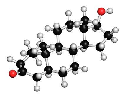 Testosteron je najmočnejši moški spolni hormon, ki ga izločajo intersticijske celice v modih.