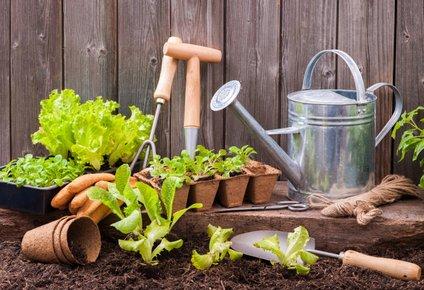Ne pozabite na primerno orodje za vrtnarjenje.