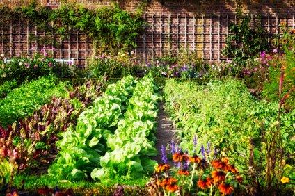 Za uspešno vrtnarjenje včasih potrebujete le kanček iznajdljivosti.