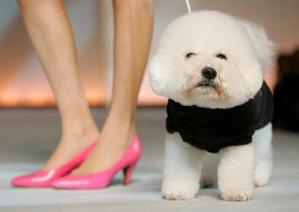 Pes za dame?