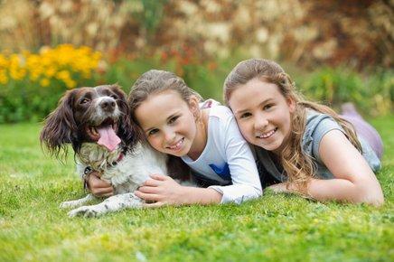 Pri psih veliko vlogo igra vzgoja.