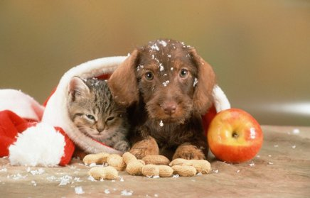 Ste ljubitelji psov ali mačk?