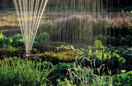 Škropilniki olajšajo naše delo na vrtu, a vsebujejo tudi skrite pasti.