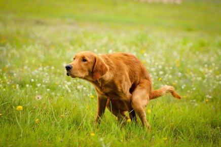 Psi nam preko svojega obnašanja sporočajo marsikaj, le poslušati jih moramo.