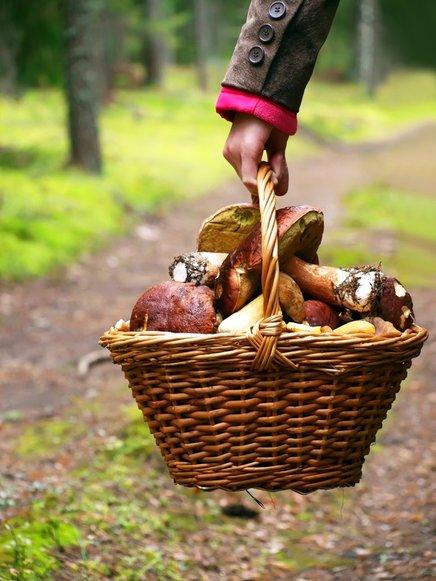 Gobarji največkrat kršijo osnovno pravilo, in sicer naberejo več gob, kot je dovoljeno.