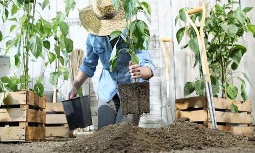 Kmetijski inštitut vrtičkarjem: Nikar ne hitite s setvijo