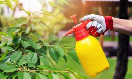 Tako lahko na vrtu uporabite sodo bikarbono