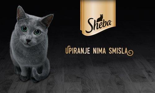 Jaz sem Sheba. Mačja gurmanka.