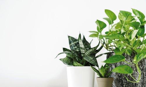 5 zlatih pravil, da ogrevanje ne bo uničilo vaših rastlin!