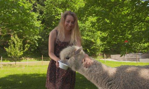 Slovenska podjetnica med svoje ljubljenčke dodala tudi alpake