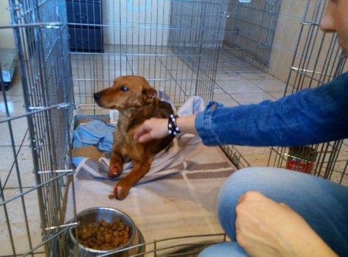 Psička Dana pri veterinarjih v Bosni - 4