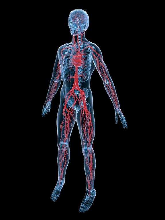 Večina pacientov s sindromom dolge QT dobe, pri katerem prihaja do nenadnih motenj srčnega ritma, je pri jemanju nekaterih zdravil opozorjenih, da ne smejo uživati soka grenivke, saj lahko ta podaljša čas med utripom srca - QT dobo.