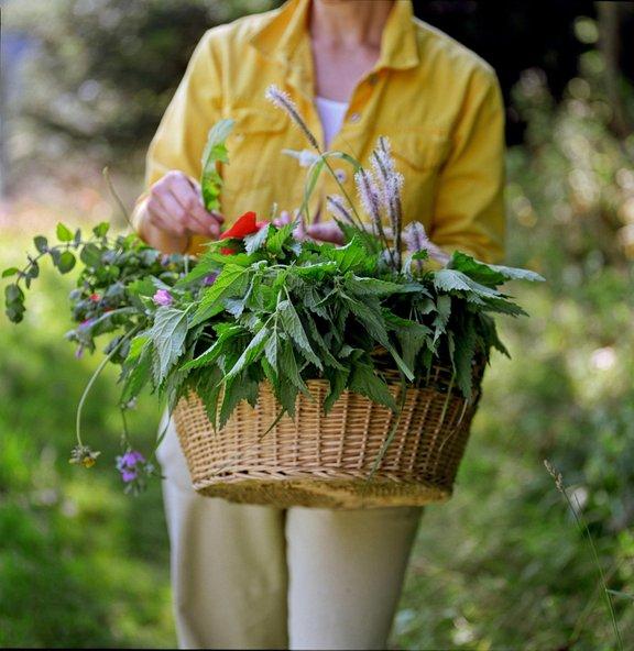 Divje rastline na naše telo delujejo krepčilno in izboljšujejo naš imunski sistem.