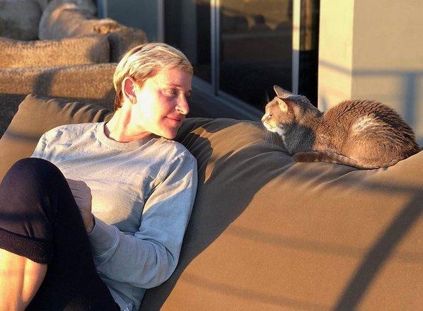 Žalostna Ellen: težko slovo od mačke