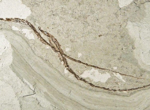 Morski konjički svetovno znana slovenska geološka dediščina