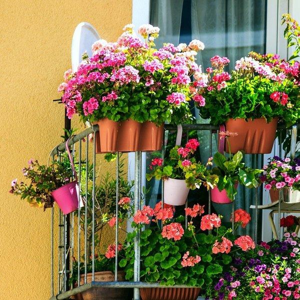 Letošnji trendi balkonskega cvetja