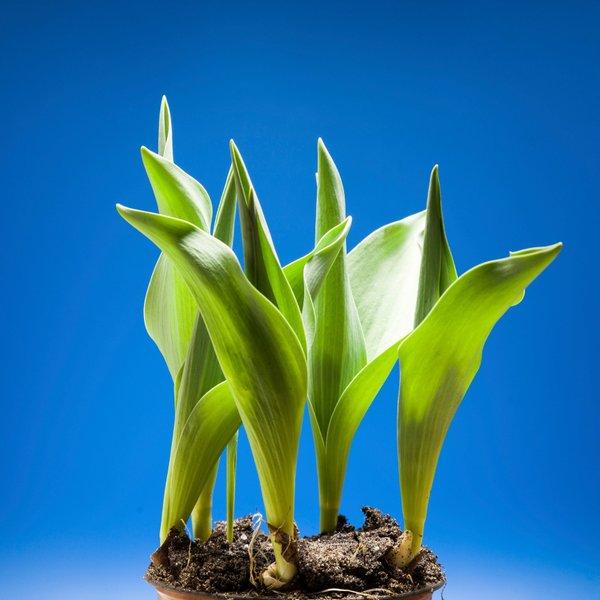 Kaj delajo rastline, ko nas ni doma?