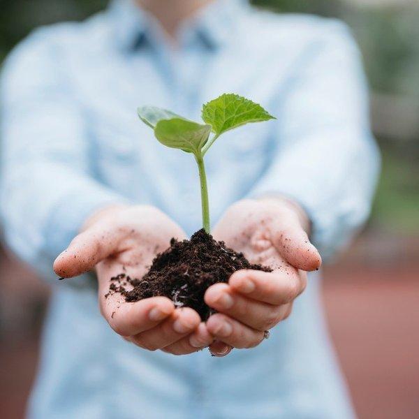 Začetniške napake pri vrtnarjenju