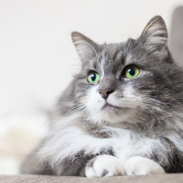 Se tudi vi sprašujete, ali je vaša mačka srečna?