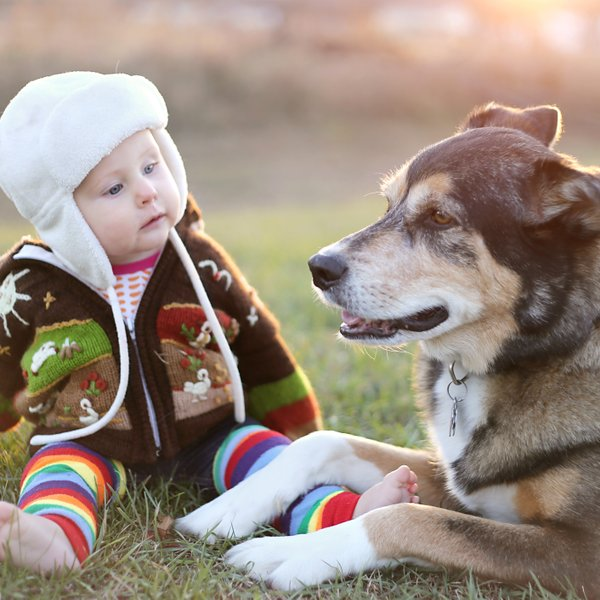 9 pasem psov z najkrajšo življenjsko dobo