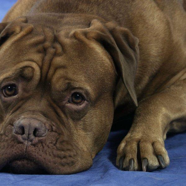 Zakaj pes je iztrebke?